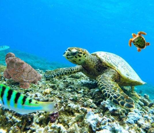 giornata della tartaruga